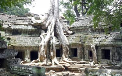 Ta Phom Temple. Tomb raiders