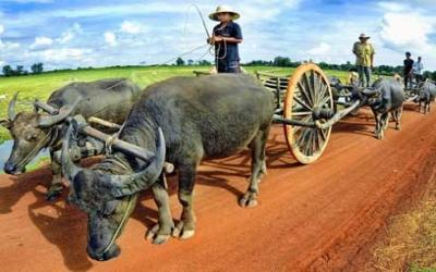 Farmers and Bullock carts