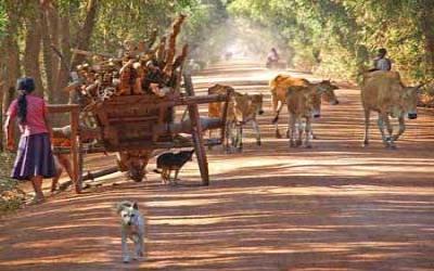Cambodia Back road