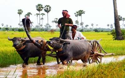 Cambodia Farmer
