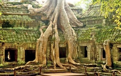 Ta Phom Tomb Raiders