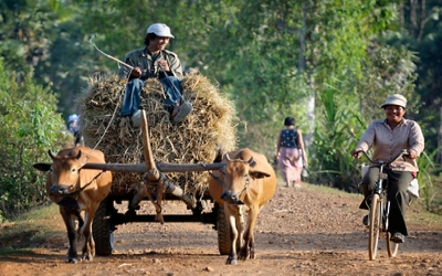 Farming Cambodia style